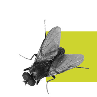 קמפיין דיגיטלי פרסום באינטרנט סוכנות דיגיטל משרד פרסום אהוי קריאייטיב